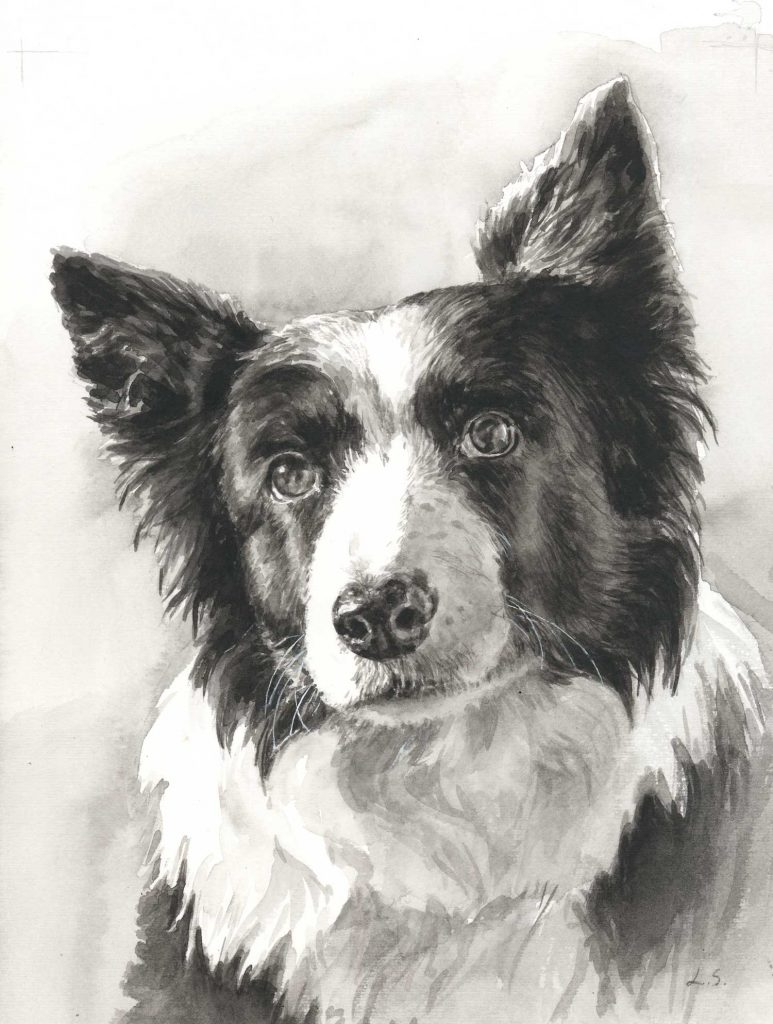 Portret Collie