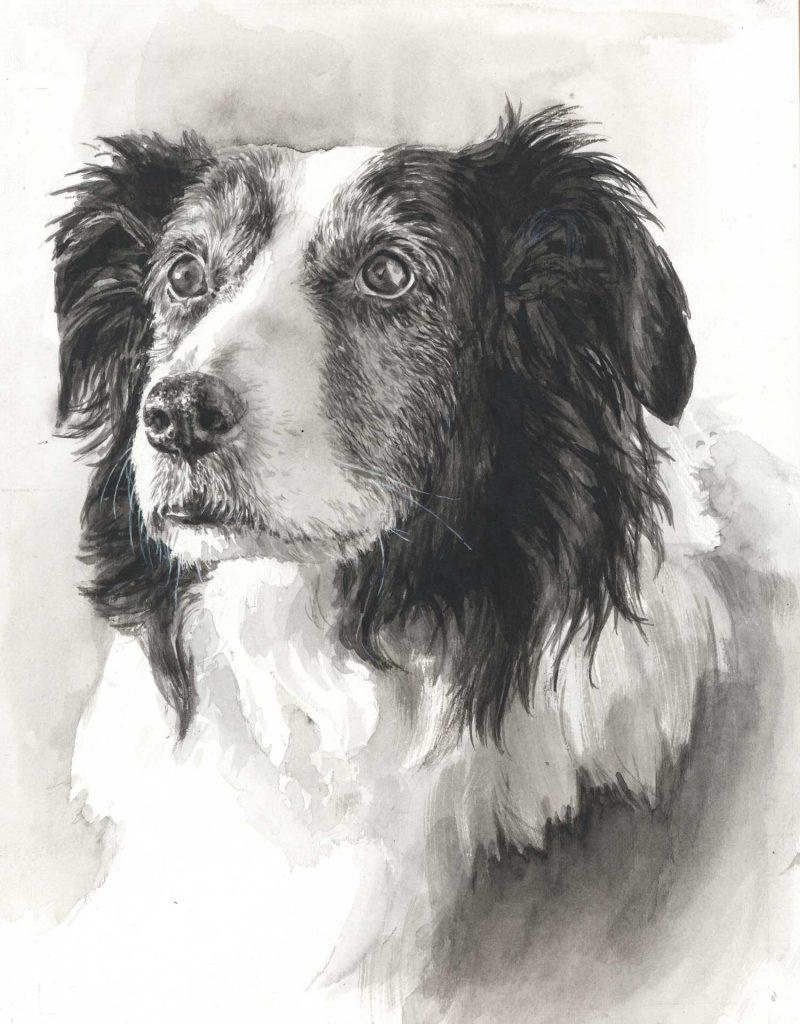 Portret collie-aquarel